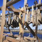 bacalà-appesi-150x150