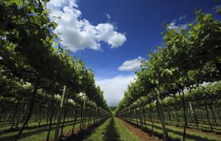 vinicolliberici, mauro fermariello