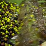 Lavaggio-olive del Garda