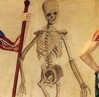 musme-pd-scheletro-vivo