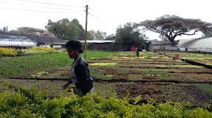 etiopia-e-uganda-mission-veronafiere-settore-agricolo-e-az-italiane