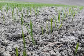 legge-consumo-suolo