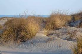 salvaguardia-dune-litorale-veneto