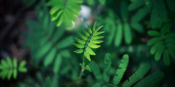 pianta-verde-foglia-montagna-studio-unipd-e1500366210579-680x340