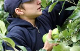 richiedenti-asilo-impiegati-in-frutticootura-inalto-adige