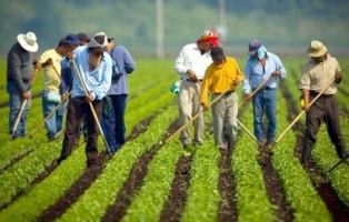 stranieri-in-agricoltura