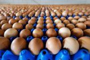 uova-contaminate-180x120
