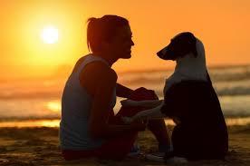 jesolo-organizza-suite-cani-e-area-spiaggia-dedicata