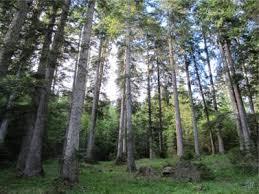 boschi-di-asiago-altopiano