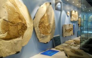 fossili-del-bolca