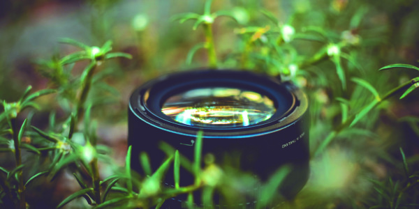 t-green-film_imagefullwide