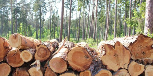 commercio-illegale-legname-ue-e-fao-gia-combattono