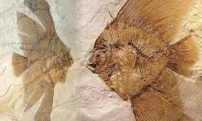 fossili-del-bolca-val-dalpone