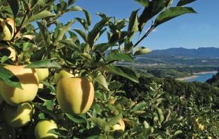mele-trentine-fondazione-mach-e-agricoltura-sostenibile