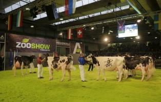 mucche-da-latte