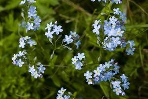 cortina_primavera_fiori_www
