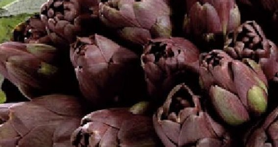 carciofo-violetto-di-santersasmo-arch