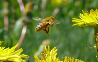 api-come-curarsi-da-punture