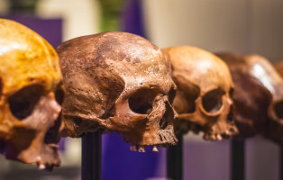 London, UK - January 17, 2018 - Selective focus, skulls without mandible on display at Science Museum in London