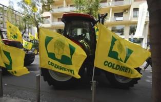 coldiretti-a-catania-contro-le-importazioni-olio-doliva-dalla-tunisia-4