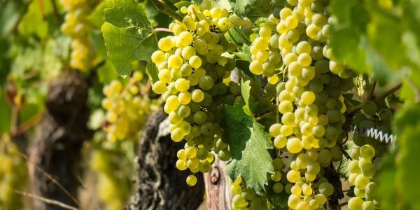 wine-3646190_1920-2400x1524_c