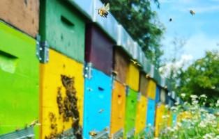 api-guerriere-2